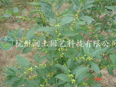 2011126150209.jpg