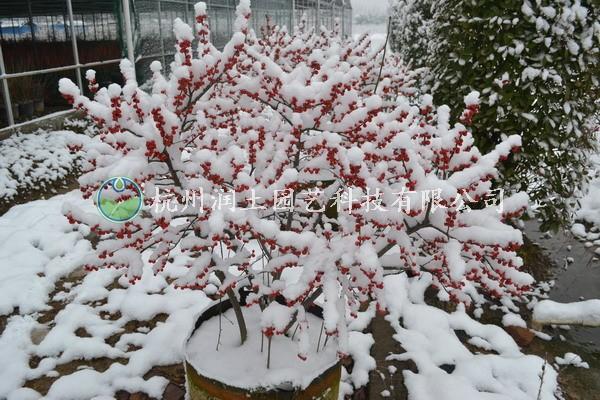 6-3雪.JPG